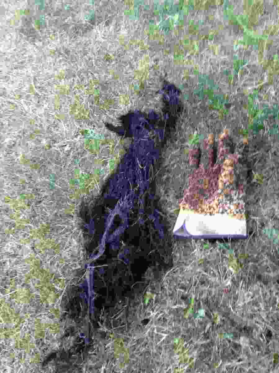 Tree Roots Intrusion In Your Sewer Line Minneapolis Mn
